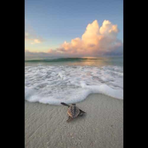 Jeffery Waldorff, Navarre, FL  www.waldorffphotography.com
